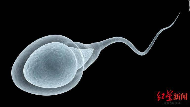 新冠疫苗影响男性生育?美研究发现竟还能